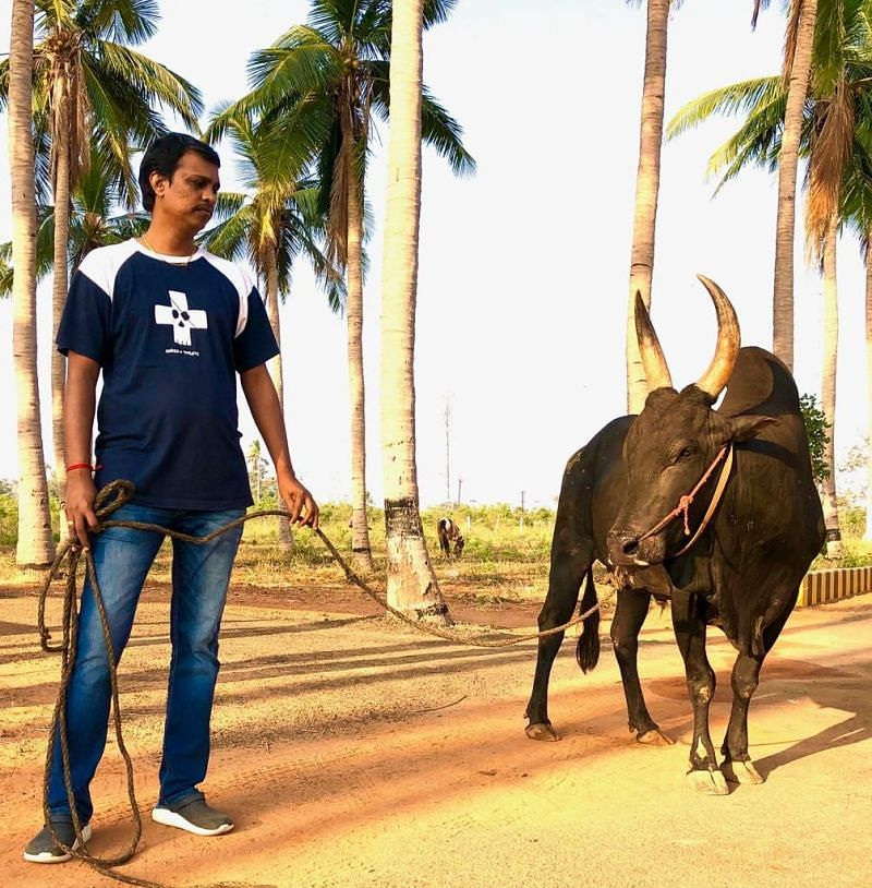 T.R.S. Muthukumaar, Founder of Jallikattu Premier League with his Bull