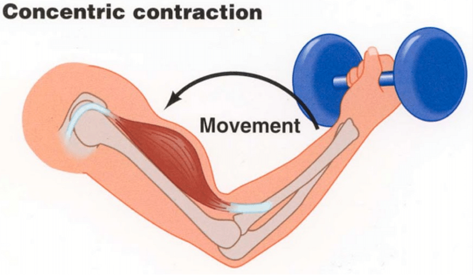 How to activate muscle fibres