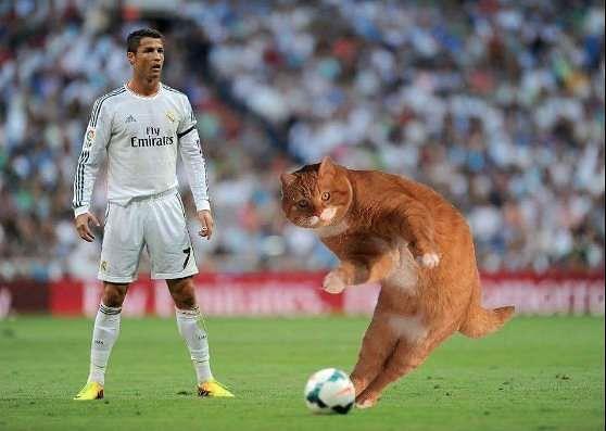 Ginger Cat Free Kick